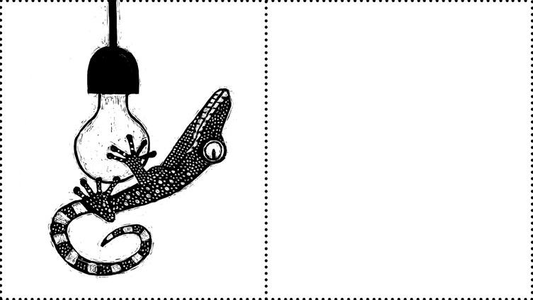 Fleur van der Weel Bibi's Bijzondere Beestenboek Bibi Dumon Tak dieren beest kinderboek genomineerd Duitse jeugdliteratuurprijs Querido gekko